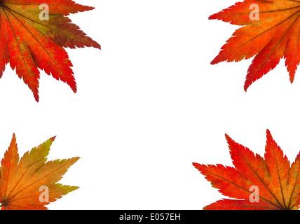 The coloured messengers of the autumn. Sheets on white background, Die bunten Boten des Herbstes. Blaetter auf weissem - Stock Photo