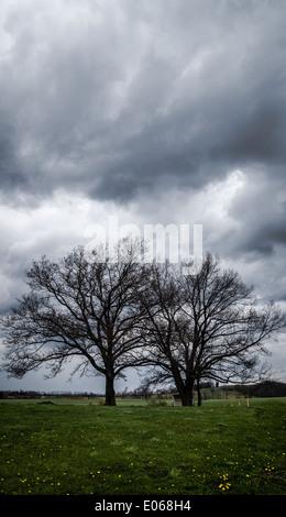 Two trees in a field below a dark, stormy sky. - Stock Photo