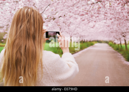 Young woman using her cell phone to capture images of the path and cherry blossoms tree at park. Rear view image - Stock Photo
