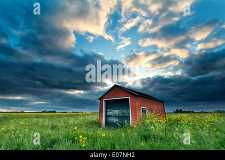 farmhouse on rapeseed field at stormy sunset, Netherlands - Stock Photo