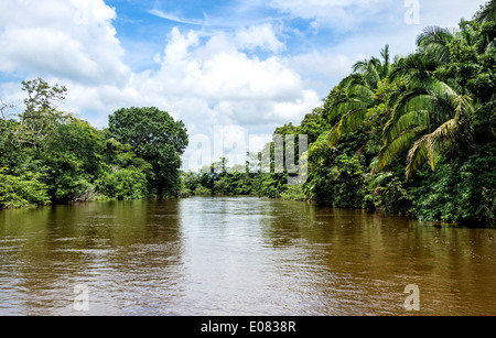 View of the Frio River in the Caño Negro Wildlife Refuge in Costa Rica. - Stock Photo