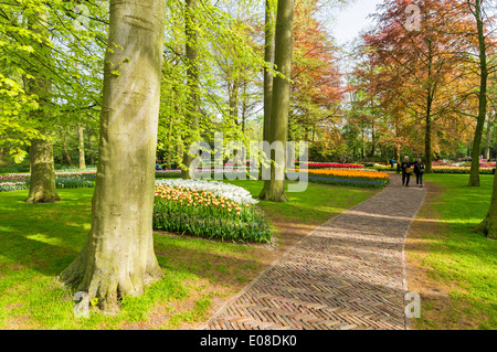 KEUKENHOF GARDENS WITH TULIPS AND PATHS  AMONG THE TREES IN EARLY SPRINGTIME HOLLAND - Stock Photo