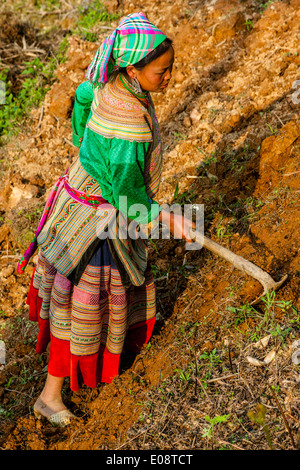 Flower Hmong Women Working In The Fields Near Bac Ha, Lao Cai Province, Vietnam - Stock Photo
