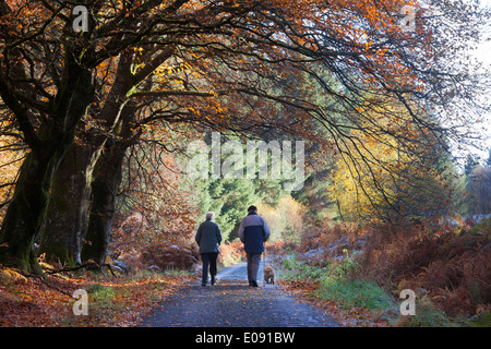 Elderly couple and dog on walk in autumn, Sidwood forest, Northumberland National Park, UK, November 2013
