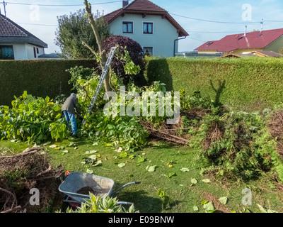 A gardener re-edits a Thuje. Works in the garden., Ein Gaertner schneidet eine Thuje um. Arbeiten im Garten. - Stock Photo