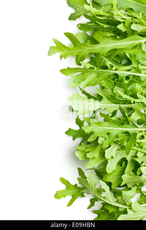 border made from fresh arugula leaves - Stock Photo