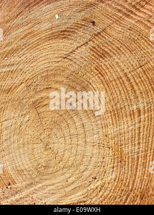Tree trunk cross-section rings are showing - Stock Photo