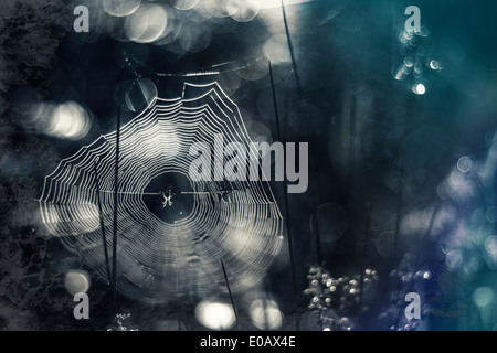 Germany, Bavaria, View of morning dew on spider web - Stock Photo