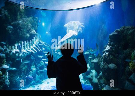 Boy admiring sea life in aquarium - Stock Photo
