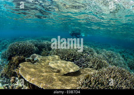 Snorkeler on coral reef. - Stock Photo
