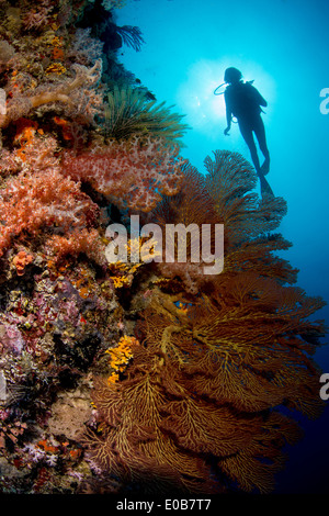 Diver on deep wall dive. - Stock Photo