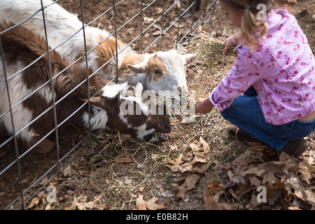 Young girl feeding goats underneath fence - Stock Photo