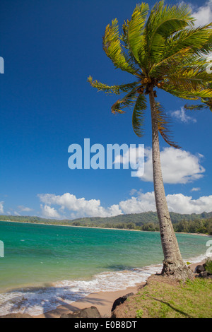 Palm tree in breeze, Kaua'i, Hawaii, USA - Stock Photo
