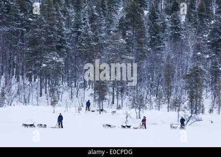 People riding dog sleds in snow covered landscape, Lapland, Finland, Europe - Stock Photo