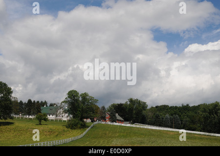 Summer Farm Green Field on a Cloudy Day - Stock Photo