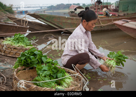 Farmers wash vegetables along the Red River in Hanoi, Vietnam. - Stock Photo