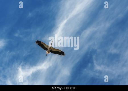 alone stork in blue sky - Stock Photo