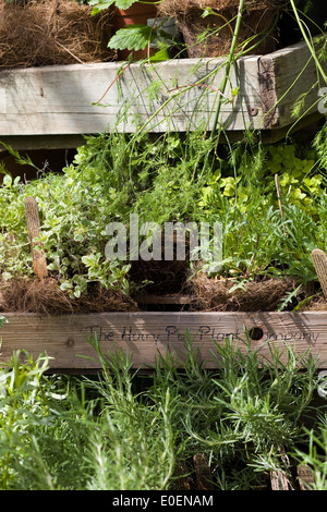 eco friendly, sustainable and ethically produced cottage garden plants and herbs grown in Hairy coir pots - Stock Photo