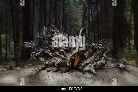 Felled Tree with exposed roots - Stock Photo