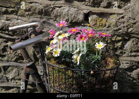 Flowers on a rusty Bicycle.Romantic Flower art. - Stock Photo