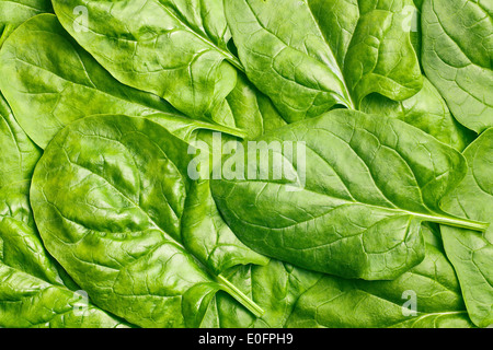 texture of green spinach leaves - Stock Photo