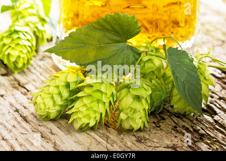 still life with hop cones and beer - Stock Photo