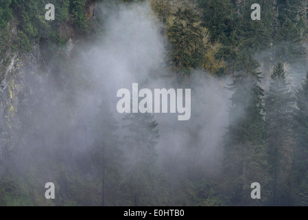 Fog over forest, Snoqualmie Falls, Snoqualmie, Washington State, USA - Stock Photo