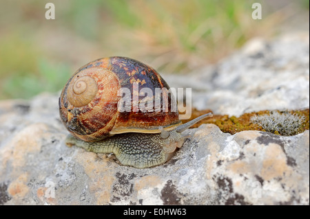 mollusk christian singles Alabama is a state in  christian koeberl with the institute of  invertebrates include 97 crayfish species and 383 mollusk species 113 of these mollusk species.