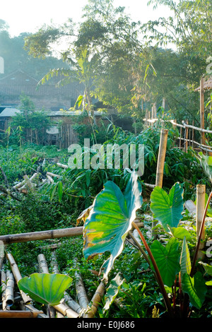 early morning sun filters down into a small rural village in east java indonesia - Stock Photo