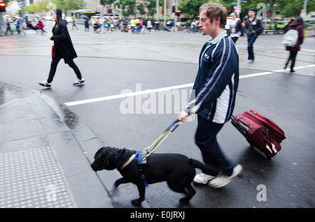 Blind man is led by his guide dog walks in the street. - Stock Photo