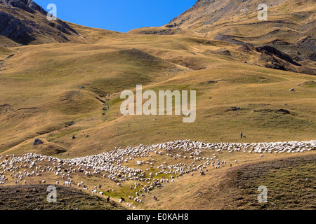 Mountain sheep and goats with shepherd in Val de Tena at Formigal in Spanish Pyrenees mountains, Spain - Stock Photo