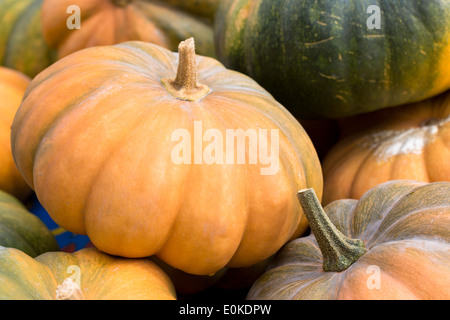 Locally-grown freshly-picked pumpkin and squash vegetable displayed for sale in Pays de La Loire, Loire Valley, - Stock Photo