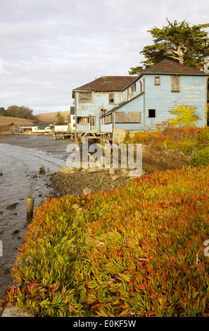 An old wooden building on Tomales Bay, Marshall, California, ice plant in the foreground. - Stock Photo
