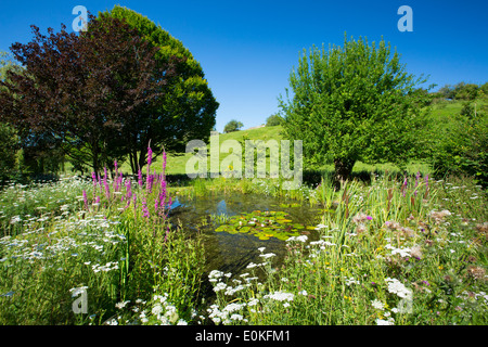 Wildlife pond, wildflowers, pond plants apple tree, maple, and hornbeam in country garden, The Cotswolds, Oxfordshire, - Stock Photo