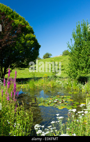 Wildlife pond, wildflowers, pond plants, Purple Loosestrife,Yarrow, apple and hornbeam tree in country garden, The - Stock Photo