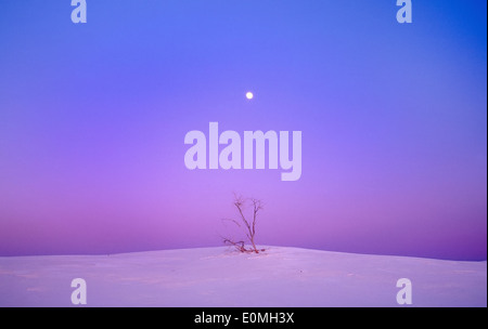 A lone, long-dead Cottonwood tree beneath a rising full moon, White Sands National Park, USA - Stock Photo