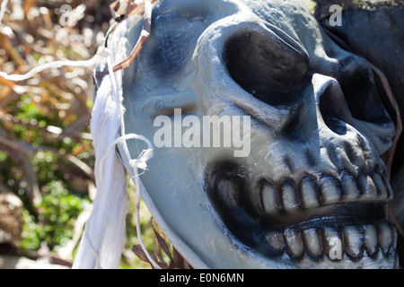 Ghoulish skeletal parts are used as Halloween decorations  in a corn maze. - Stock Photo