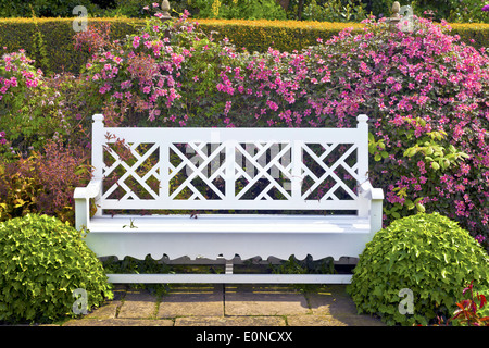 Wooden garden bench with topiary shrubs and pink clematis. - Stock Photo