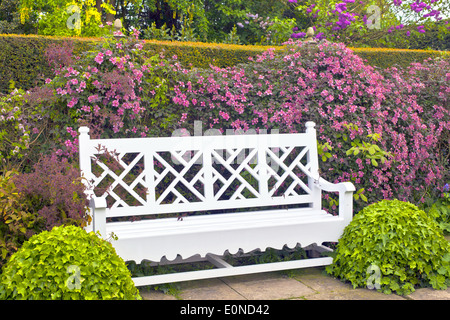 Vintage wooden garden bench with topiary shrubs and pink clematis. - Stock Photo