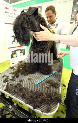 London, UK. 17th May 2014. Dog grooming at the London Pet Show, Earls Court, London. Credit:  Paul Brown/Alamy Live - Stock Photo
