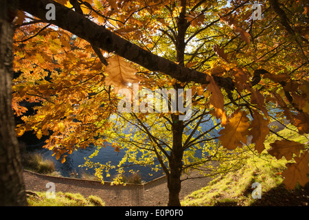 Autumn colors in the oak trees on edge of lake. - Stock Photo