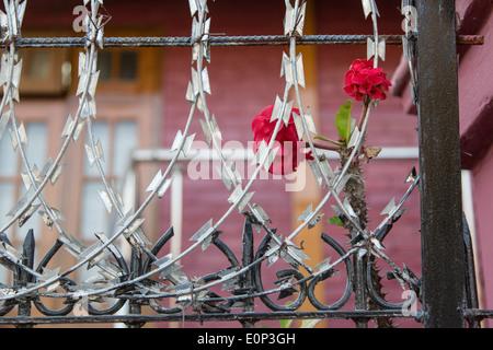 Razor wire with flowers - Stock Photo