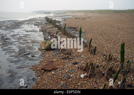 Ancient wooden fish trap, from the late Saxon or early Tudor period, East Lane, Bawdsey, Suffolk, England. - Stock Photo