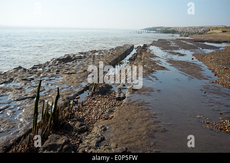 Ancient wooden fish traps from the late Saxon early Tudor period, East Lane, Bawdsey, Suffolk, UK. - Stock Photo