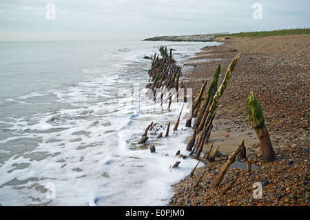 Ancient wooden fish traps from the late Saxon or early Tudor period, East Lane, Bawdsey, Suffolk, UK. - Stock Photo