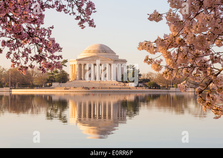 Washington DC - Jefferson Memorial, Washington DC and Tidal Basin, , USA - with pink cherry blossom, early morning - Stock Photo