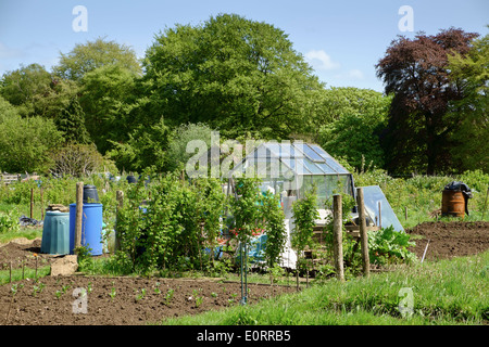 Allotments in England, UK with greenhouse, allotment and gardening plots for growing vegetables - Stock Photo