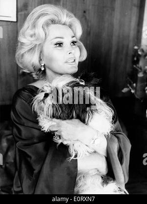 Actress Zsa Zsa Gabor holding her puppy - Stock Photo