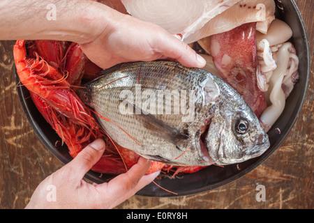 hands holding fresh raw fish preparing cook cooking prepared 'sea bream' bream shrimps - Stock Photo