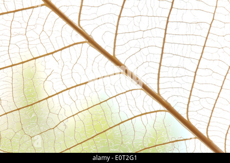 Dried leaves abstract floral background concept - Stock Photo